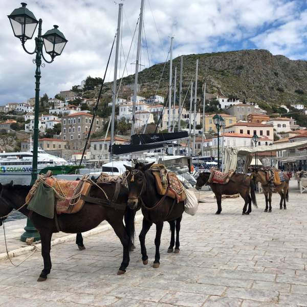 Visit Hydra by foot or by donkey!